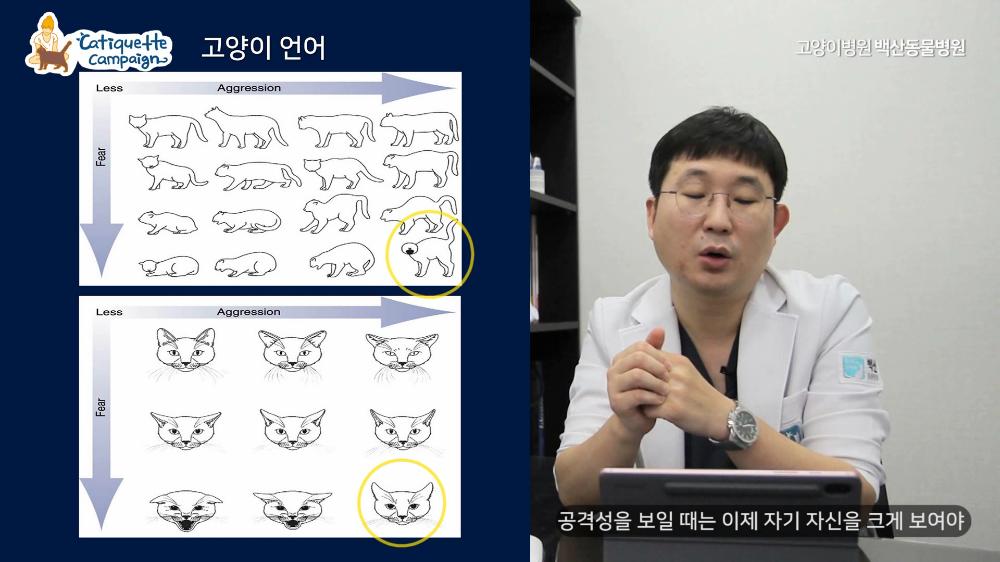 2020캣티켓캠페인_최종제작.mp4_000242075.png